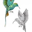 colibri-aline-gradelet-weclewicz