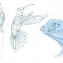 croquis-animaux-aline-gradelet-weclewicz