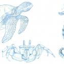 croquis-animaux-aquatique-aline-gradelet-weclewicz