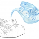 grenouille-aline-gradelet-weclewicz