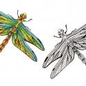 libellule-aline-gradelet-weclewicz