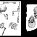anatomie-01-aline-gradelet-weclewicz