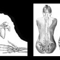anatomie-02-aline-gradelet-weclewicz