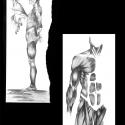 anatomie-03-aline-gradelet-weclewicz